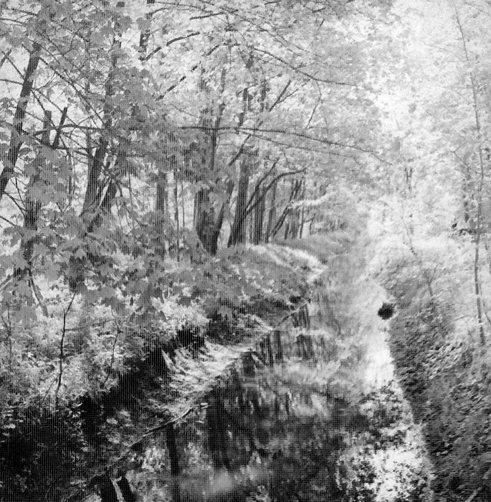 Brook through the woods