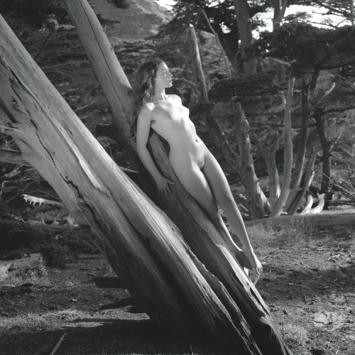 "Plate 7 ""Cypress Siren"""