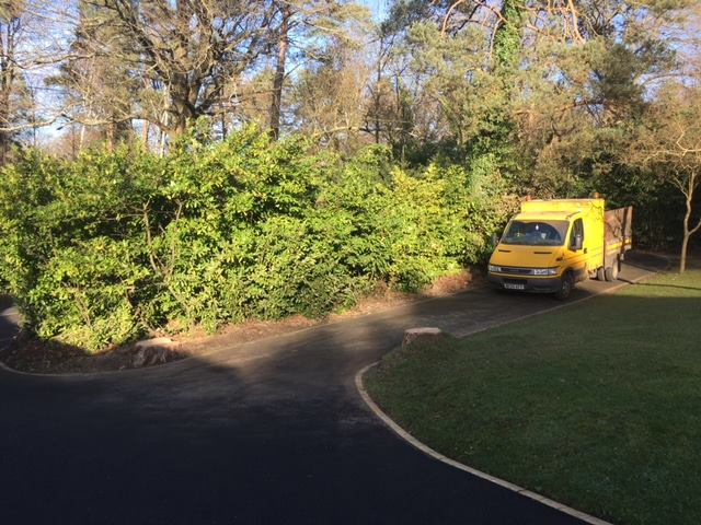 Dangerous Pine trees safely removed.