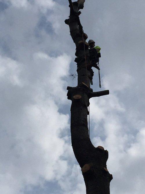 Climbing1.jpg