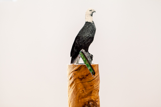 L'oiseau coupé