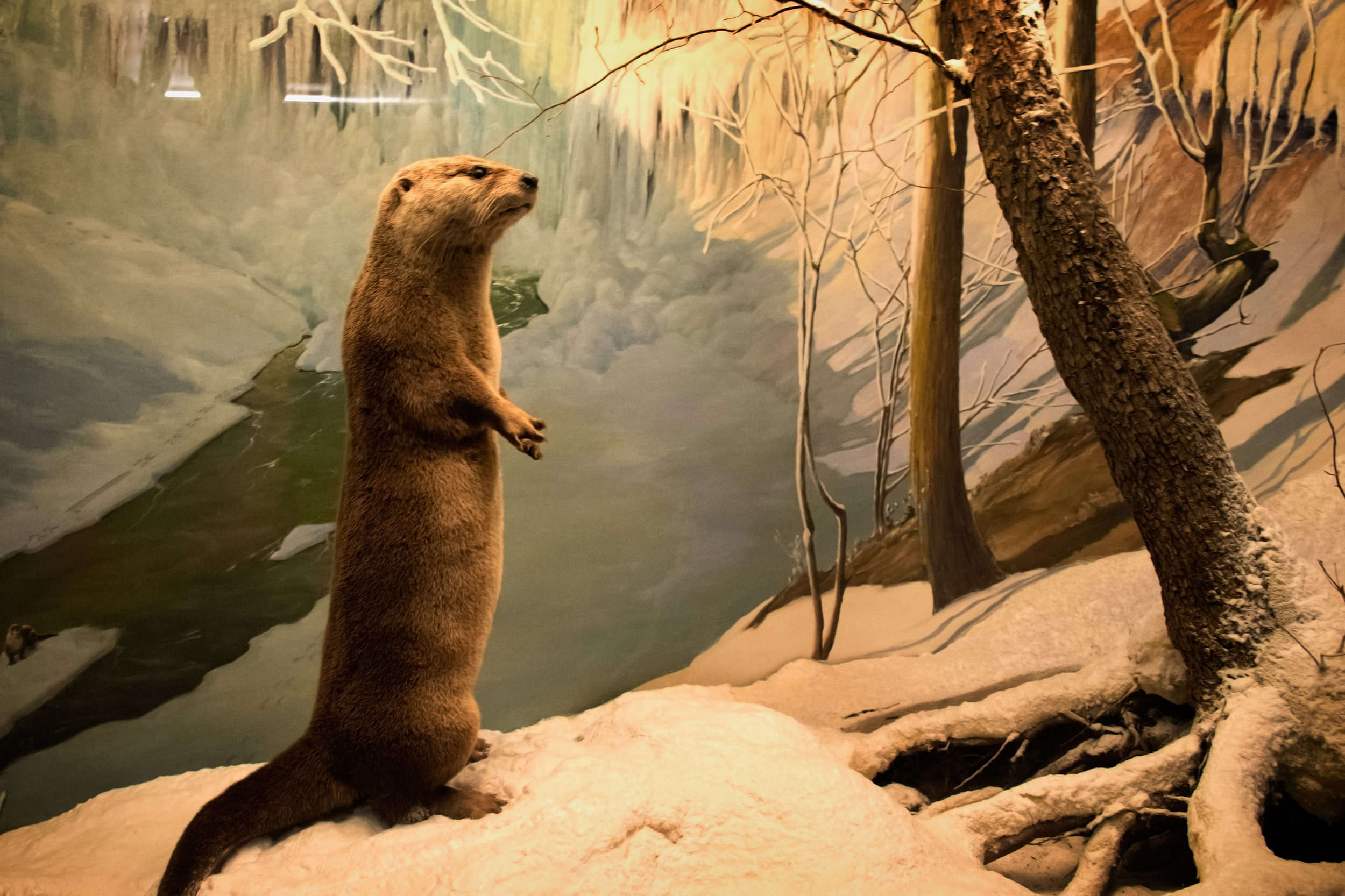 You otter believe they have greatdioramas...