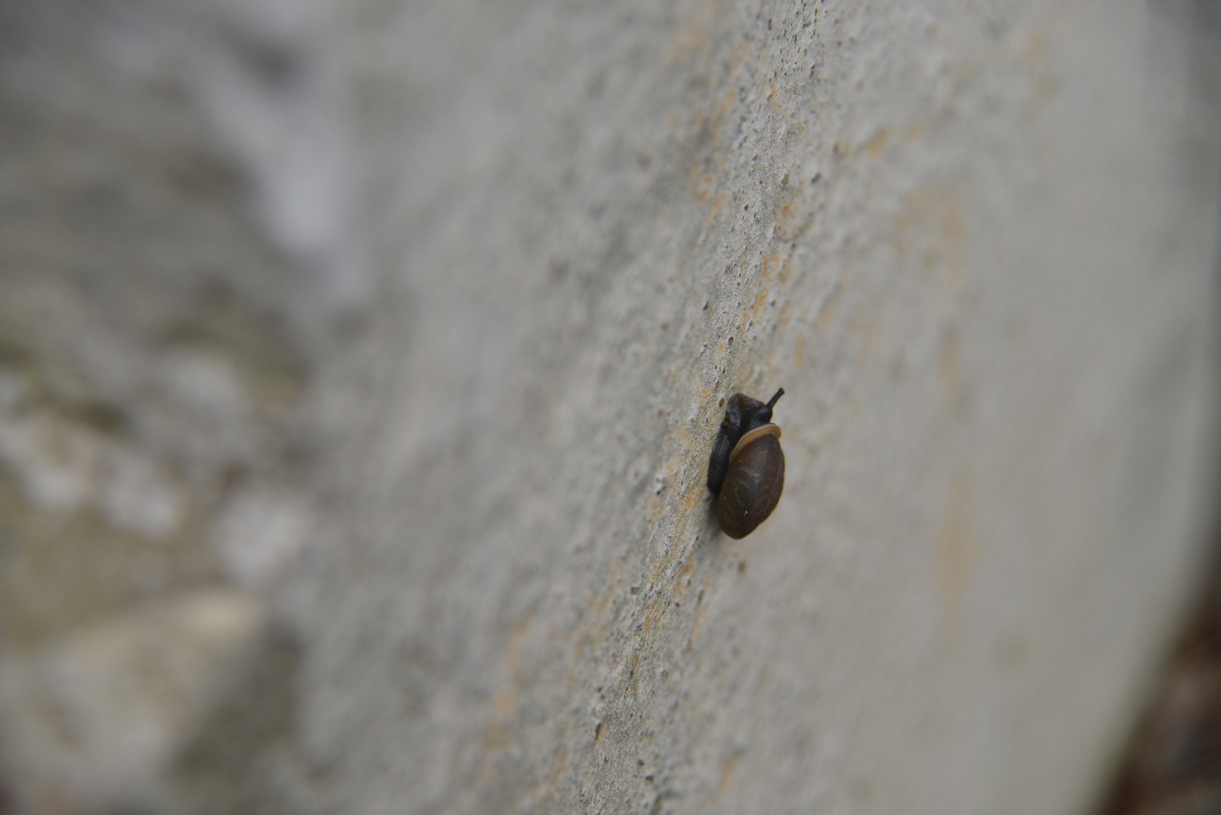 "Sometimes life is too fast, so we need to get into this snail mode to quietly enjoy the ride. So take time this summer to enjoy the small things in life and slow down. But sometimes, we need to jump in the go-kart called ""life,"" and push GO and squeal..."