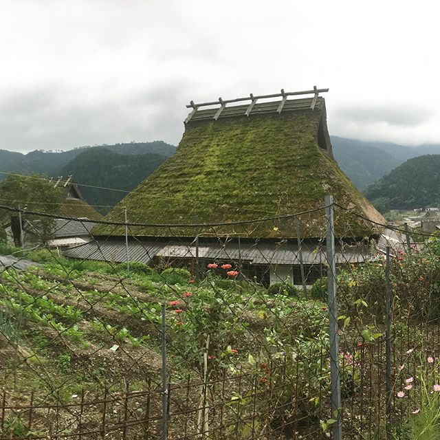 The beauty of Miyama! What a magic place. There was indigo growing around the Little Indigo Museum, marigolds and cosmos everywhere. People were gardening all over the town. So much to see. We had so much fun exploring the area with @alexscottco and  @mperkwerk and experienced a traditional Minshuku where we enjoyed fantastic food and lodging. #littleindigomuseum #miyama #thatchedroofhouse #indigo #farms #gardens #japan