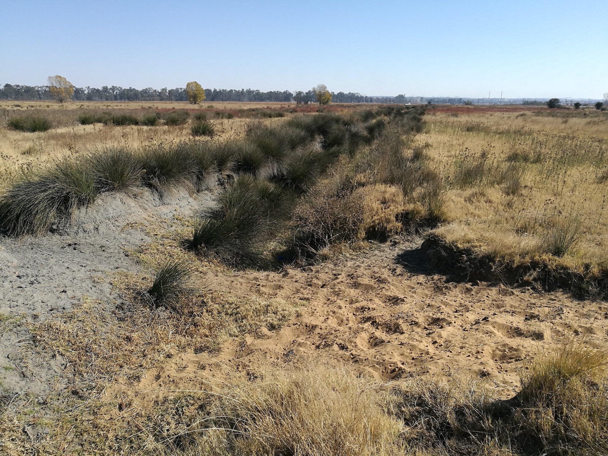 Impacted wetland