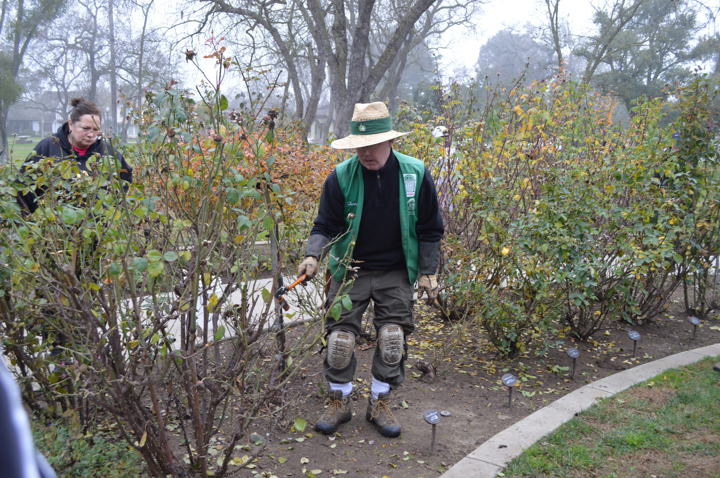 Stockton Beautiful Rose Pruning 2015 030.JPG