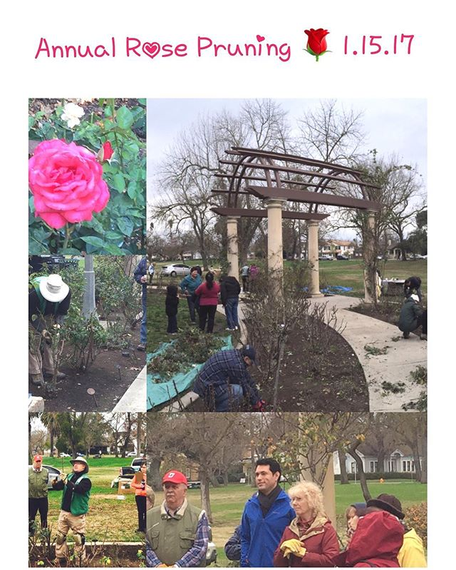 Join us on Sunday, 1.15.17 for our Annual Rose Pruning event at 9:00 am at the Gerry Dunlap Rose Garden, Victory Park