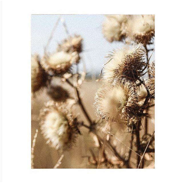 Autumn vibes 🍁#autumn #postitfortheaesthetic #allwhatisbeautiful #gatheredstyle