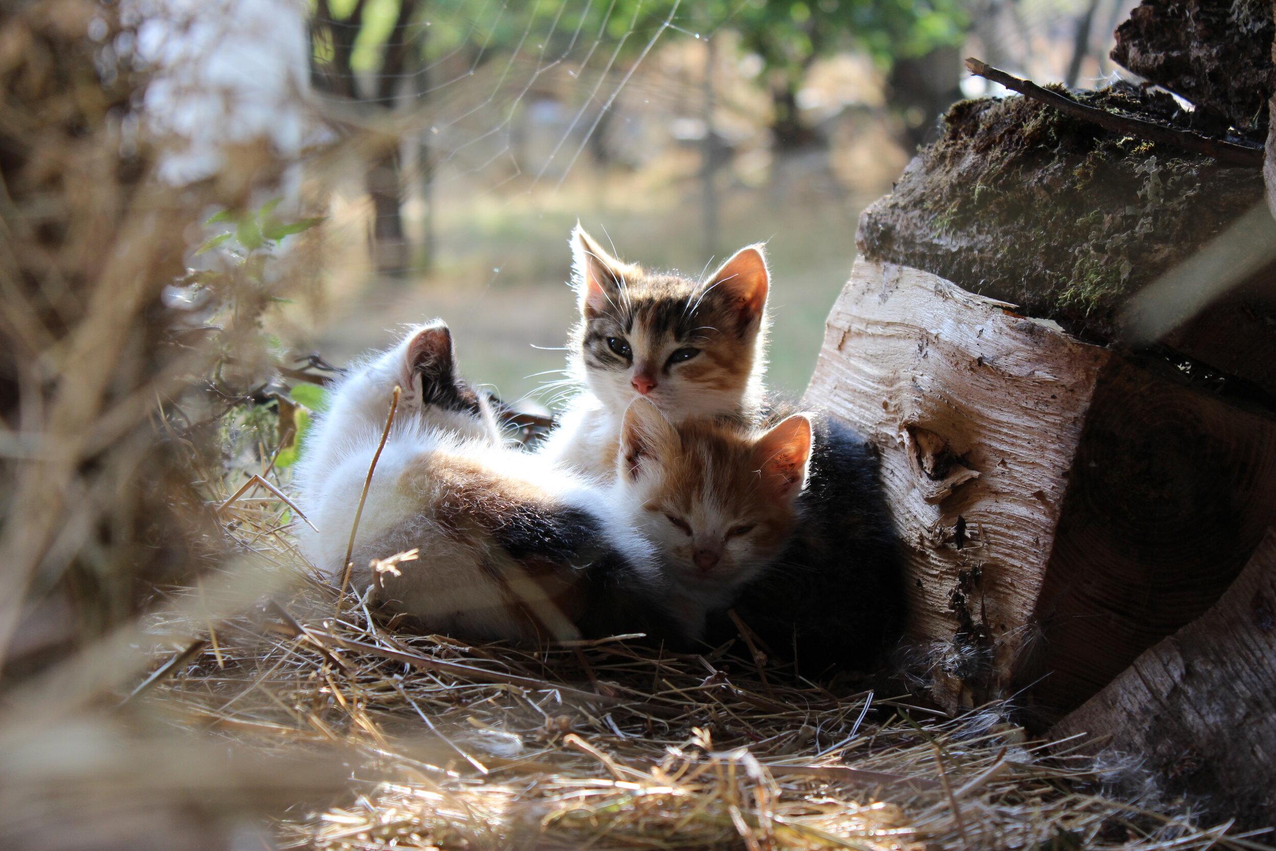 September kitties