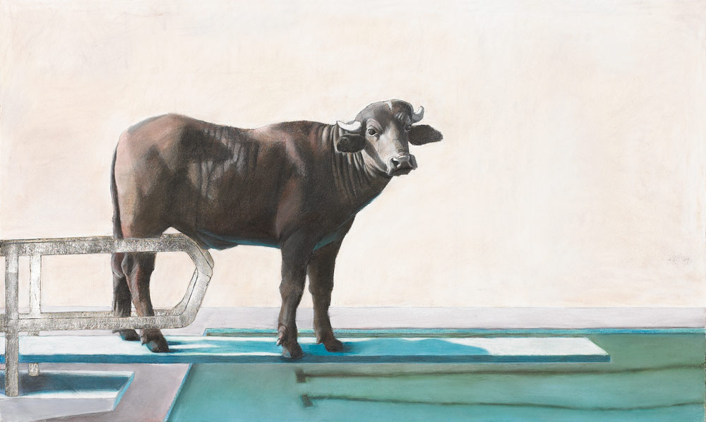 Calf on a Diving Board