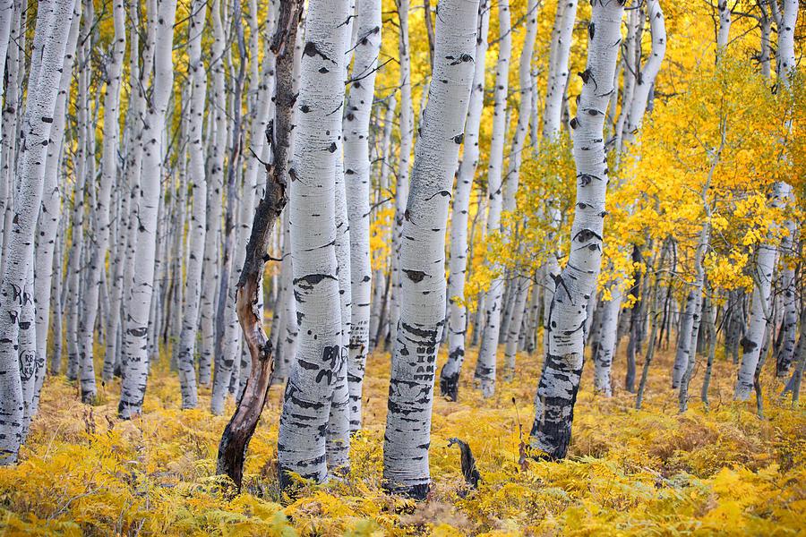 RUN THROUGH THE WOODS  Explore over 35 acres of pristine woodland.