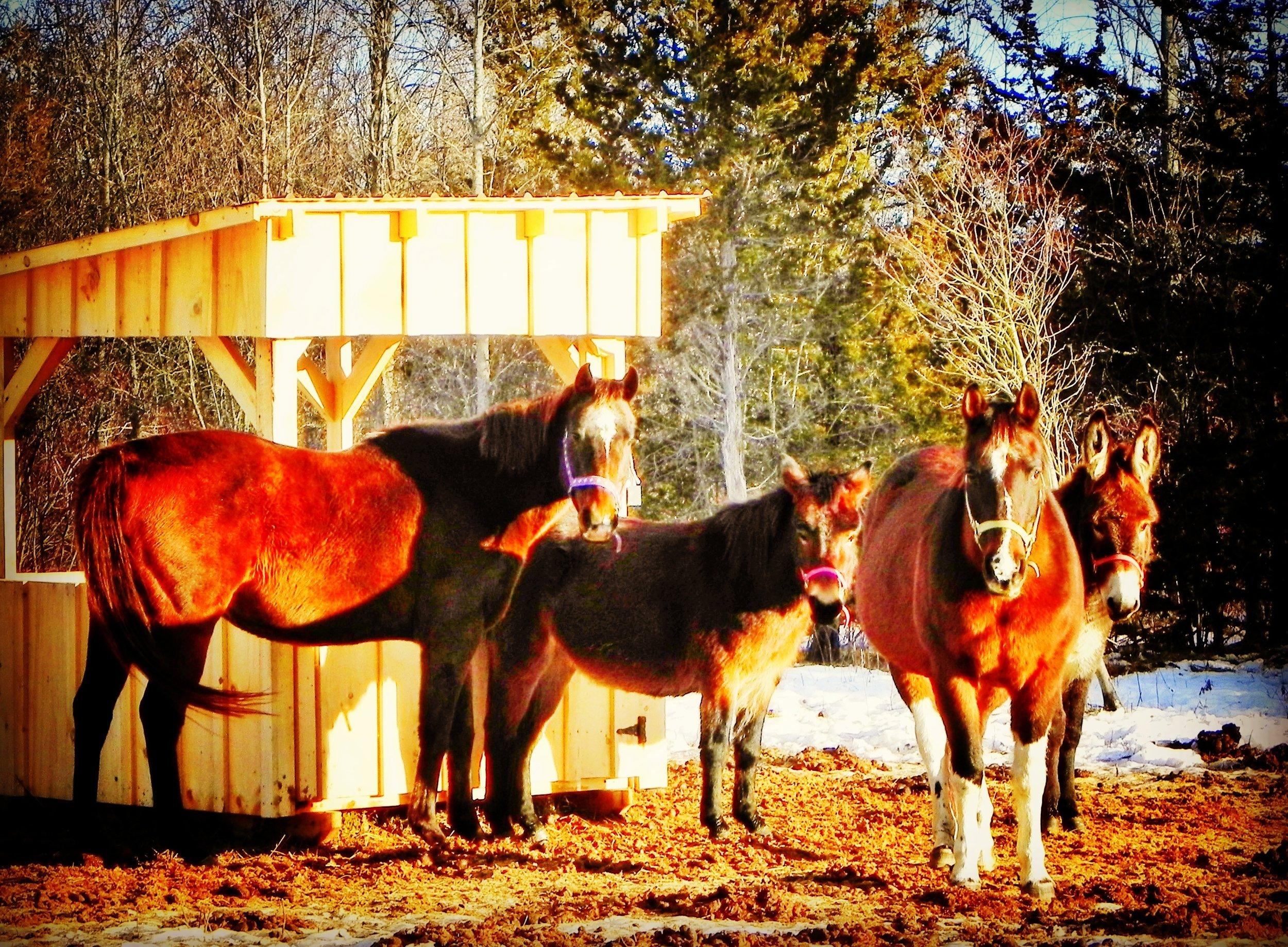 equine herd 2.jpeg