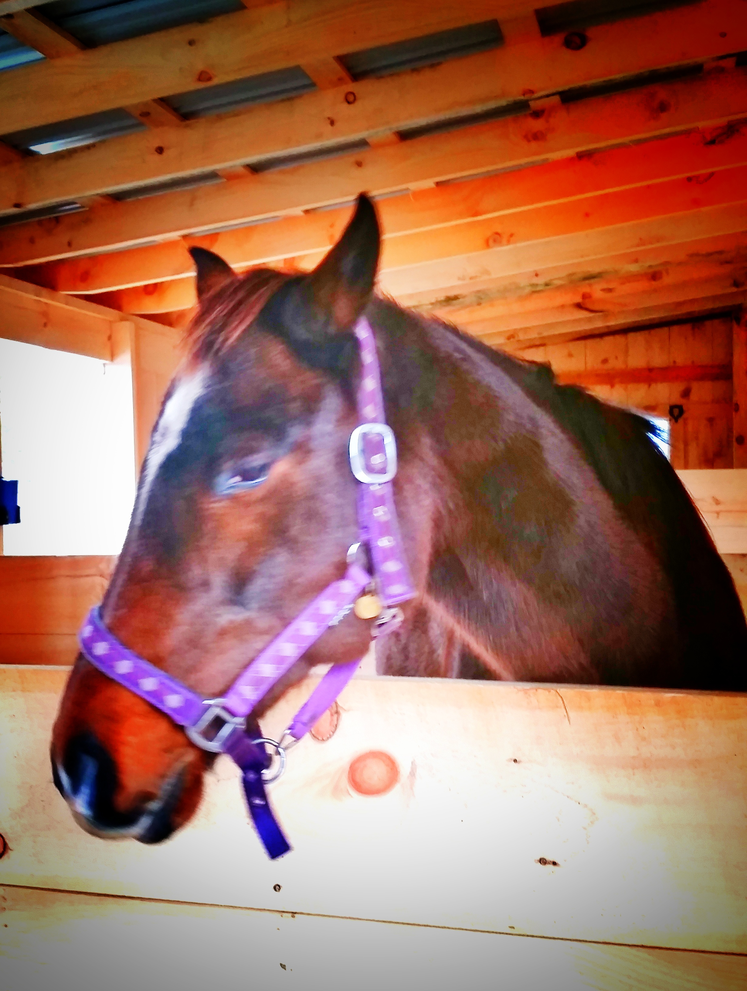 Trooper (Thoroughbred horse)