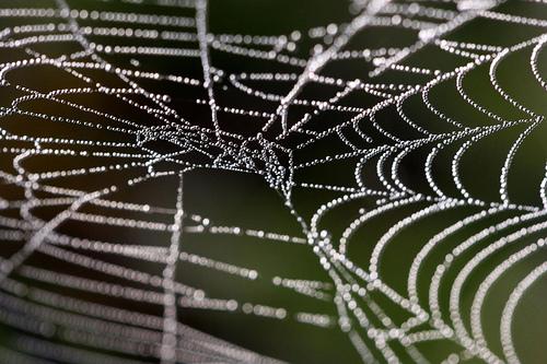 spider-web-2-lisa-gillispie