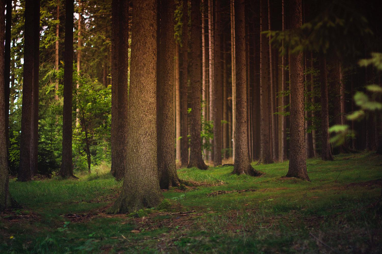 image-tree-trunks.jpg