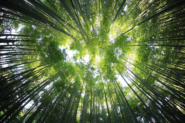 image-trees-sky.jpg