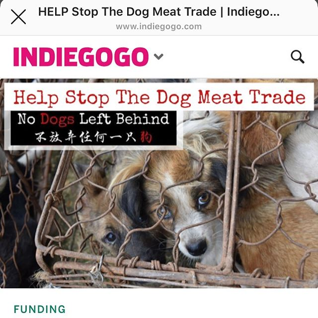 This is urgent. The Yulin dog meat festival is coming up at the end of June and 10-15 THOUSAND DOGS will be tortured and eaten. This organization saves as many as they can but their boarding is FULL. They need to get these dogs out of China ASAP so they can rescue more dogs. They need to raise this money as soon as possible. This seriously kills my heart and makes me cry knowing this is happening. I just donated. Please donate. LINK IN BIO. Every little bit helps!!!!!!! #dogmeattrade #rescuedog #yulindogmeatfestival #nodogsleftbehind @nodogsleftbehind #savethedogs #indiegogo #fundraiser #stopdogmeattrade