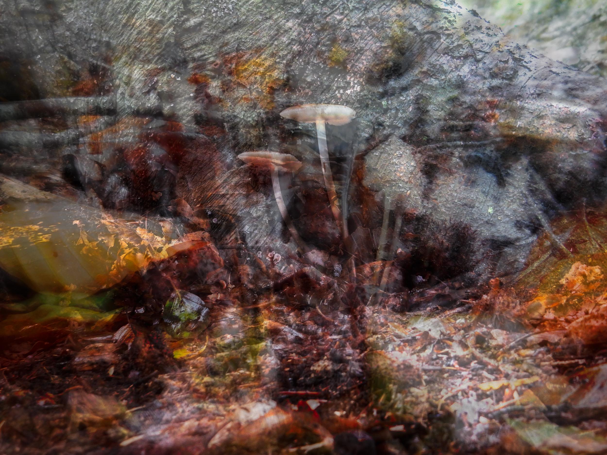 Mushroom - Art