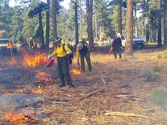 Forest Service Prescribed Burn (Source: USDA Forest Service)