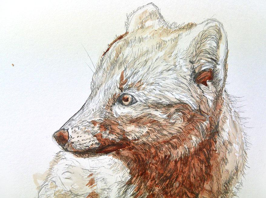 blood fox d1.jpg