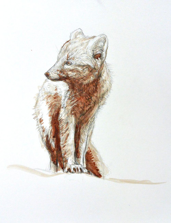 blood fox.jpg