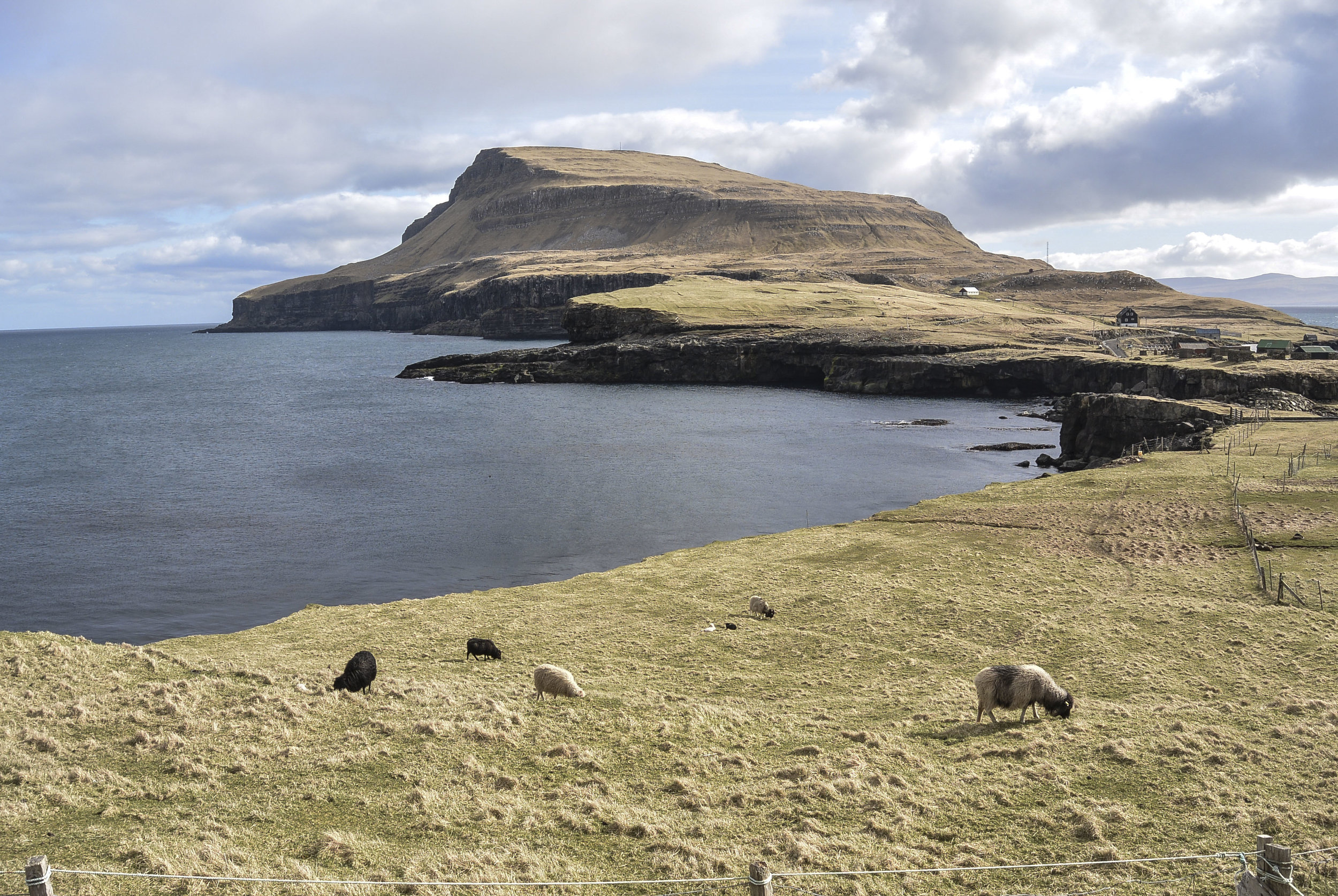 Sheep graze on the far end of the island of Nolsay, in the Faroe Islands, in April, 2016. The island is reachable by ferry from Torshavn. (Megan Perra)