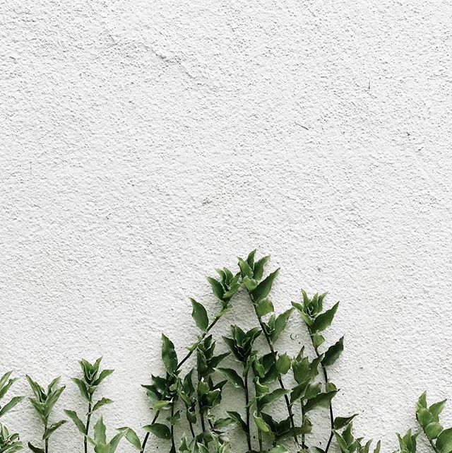 Signing off the week with a snap from one of my favourite Canberra laneways 🌱 Inspiration can be found anywhere if you look for it. Happy weekend ✌🏼