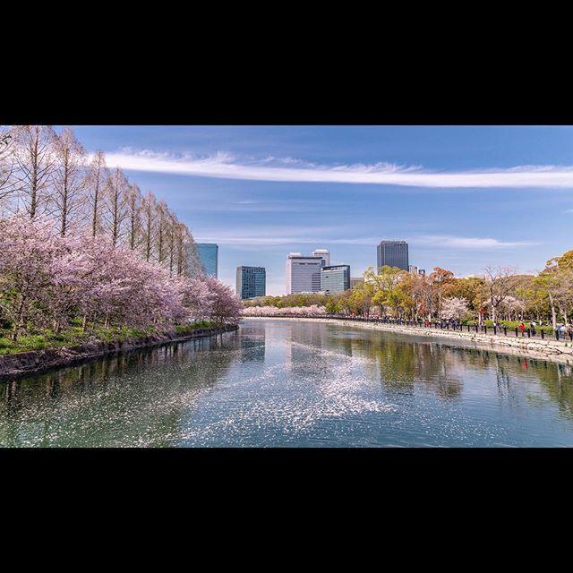 Springtime in Osaka #citylife #cityview #sakura #cherryblossom #japan
