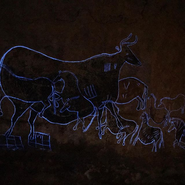 A #blacklight highlights the hard to see engraving around these paintings in Lascaux. At the replica at Parc Le Thot, Thonac. ---------------------------------------------#france #art #archaeology #Lascaux #paleo #perigord #prehistoric #prehistoire #paleolithic #dordogne #engraving #history #iceage #stoneage #travelphotography #travel #photography #ancient #painting #cavepainting #caveart #anthropology