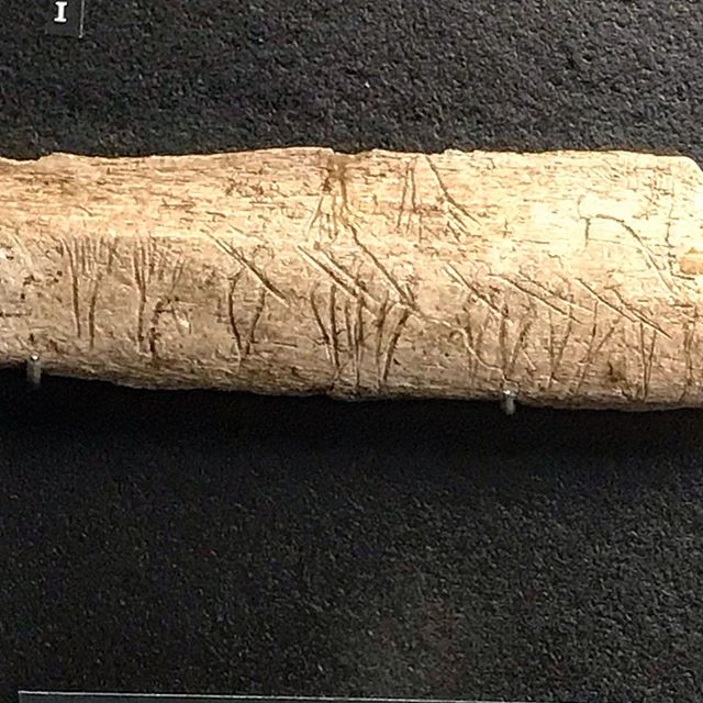 What do you see on this engraved rib from the magdalenian era?  I think it's a line of men with spears on their shoulders heading towards an aurochs in the top right corner. Those things on the left may be trees. At the Musée National de Préhistoire, Les Eyzies, France. Photo has been enhanced to make the lines stand out more. --------------------------------------#paleolithic #prehistoric #prehistoire #paleo #perigord #dordogne #museeprehistoire #france #art #archaeology #stoneart #stoneage #iceage #history #carving #travelphotography #travel #photography #leseyzies #ancient #hunting #anthropology #prehistorictourist