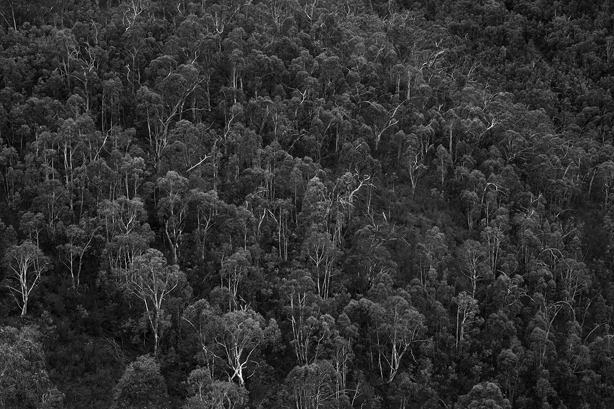 near Bendora Dam forest, Namadgi NP, February 2017-1.jpg