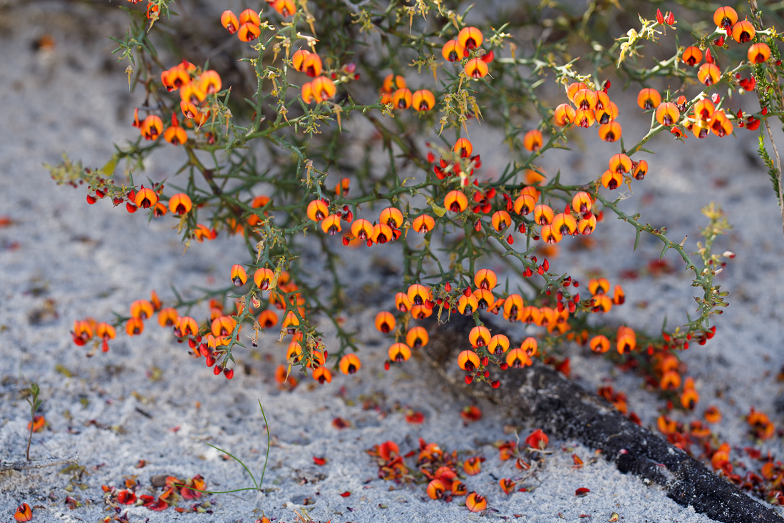 Plants use flowers to attract pollinators, using both visual and chemical signals.