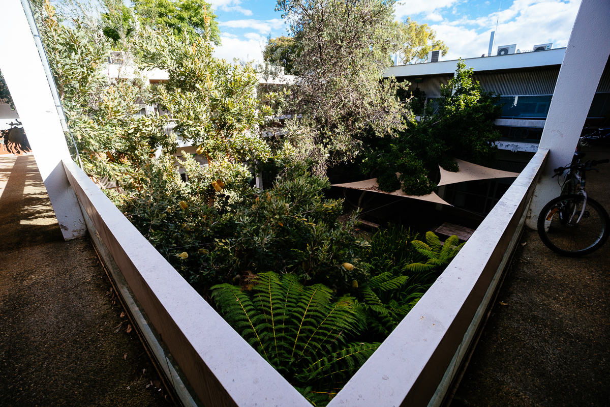 The view over the courtyard from the second floor. Banksias, tree ferns, magnolia.
