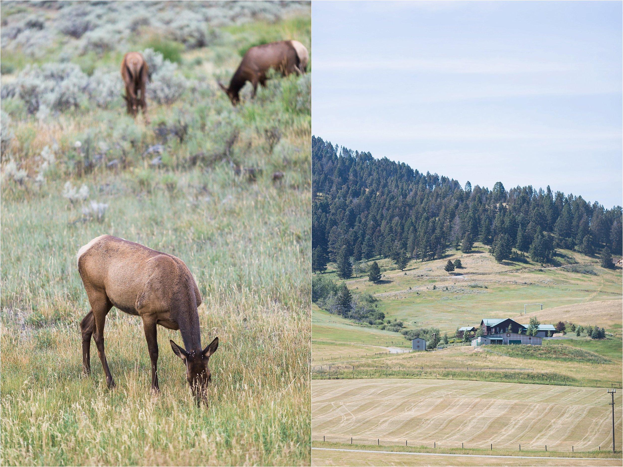 Montana Travel_0035.jpg