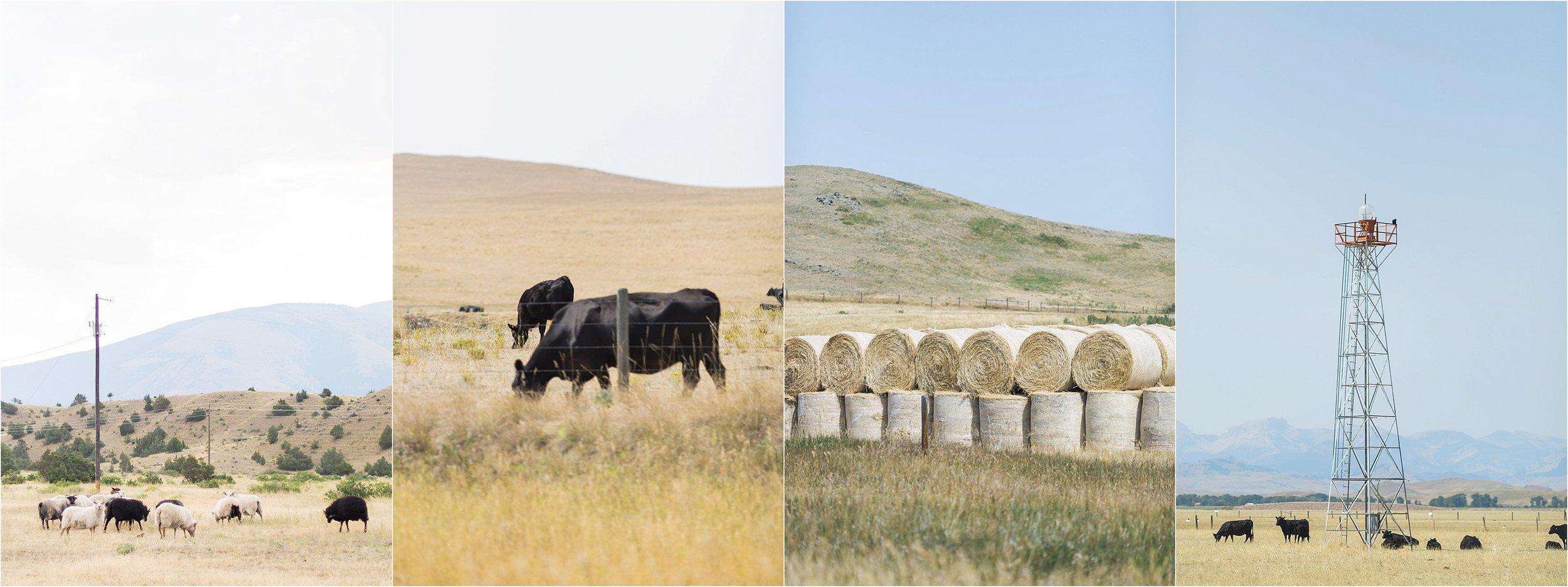 Montana Travel_0041.jpg