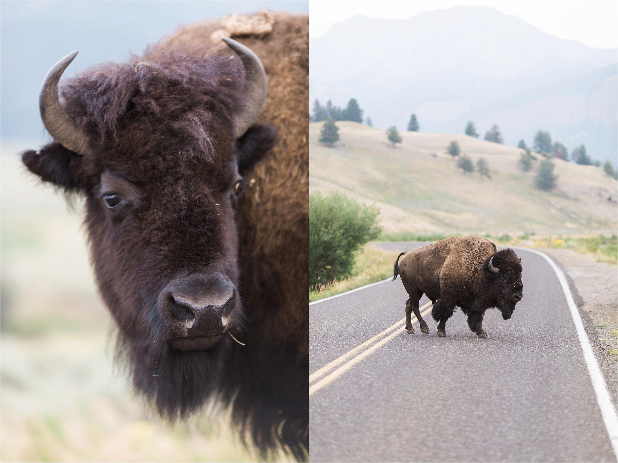 Montana Travel_0051.jpg