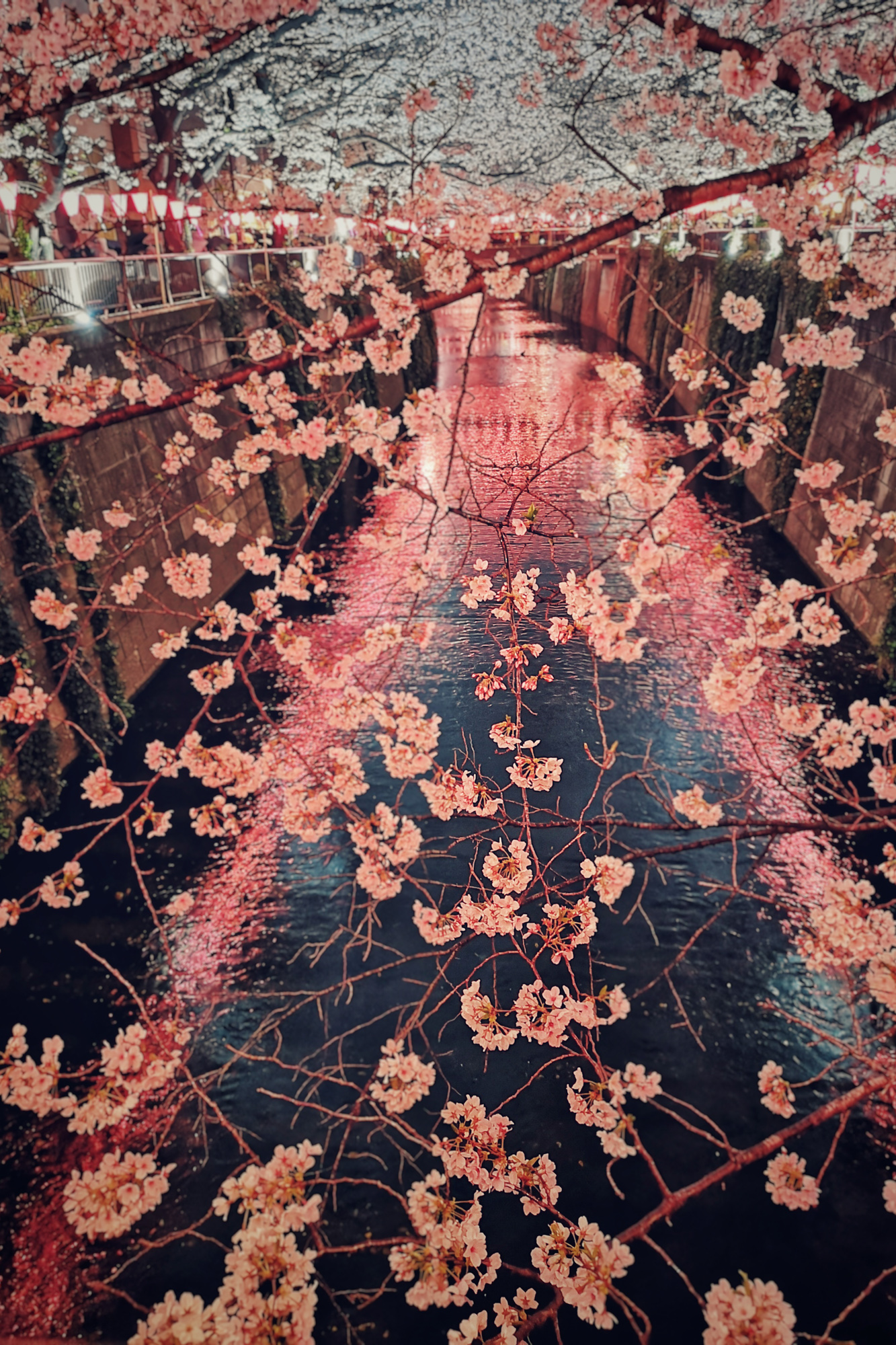 Cherry Blossoms, Nakameguro - Tokyo. Huawei P20 Pro Night Mode
