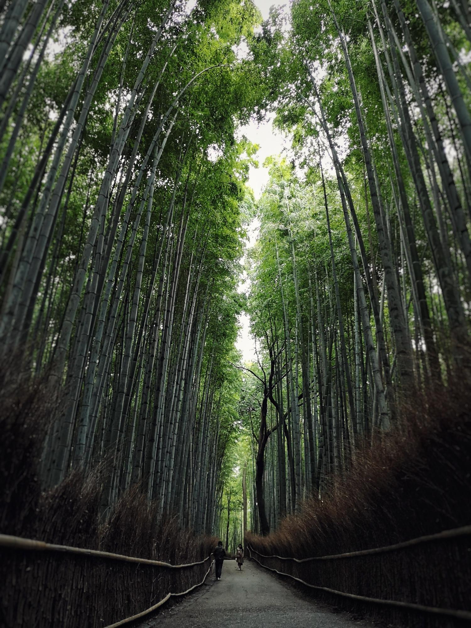 Arashiyama Bamboo Forest. Huawei P20 Pro
