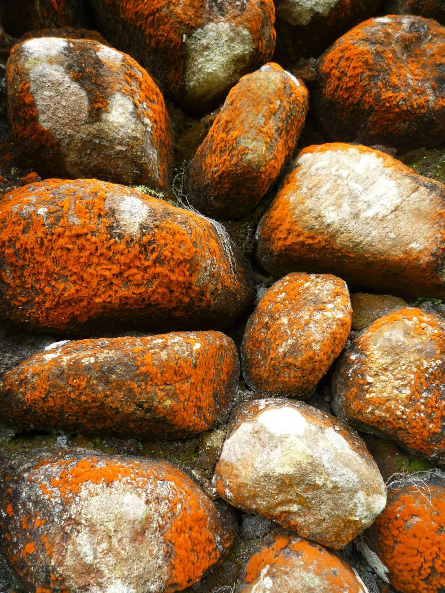 Bokor Mountain: Photo Detail