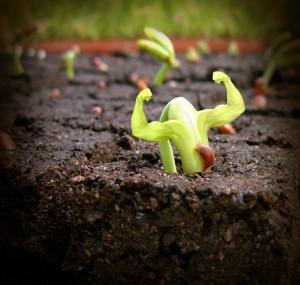 seedling-300x285.jpg