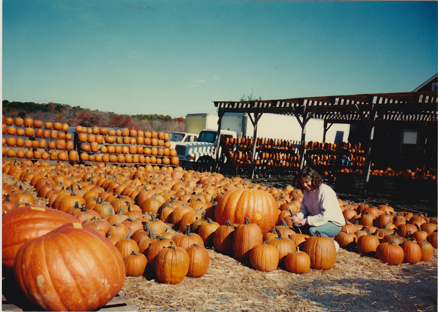Pumpkins in the fall.