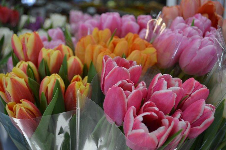 Spring Cut Flowers.