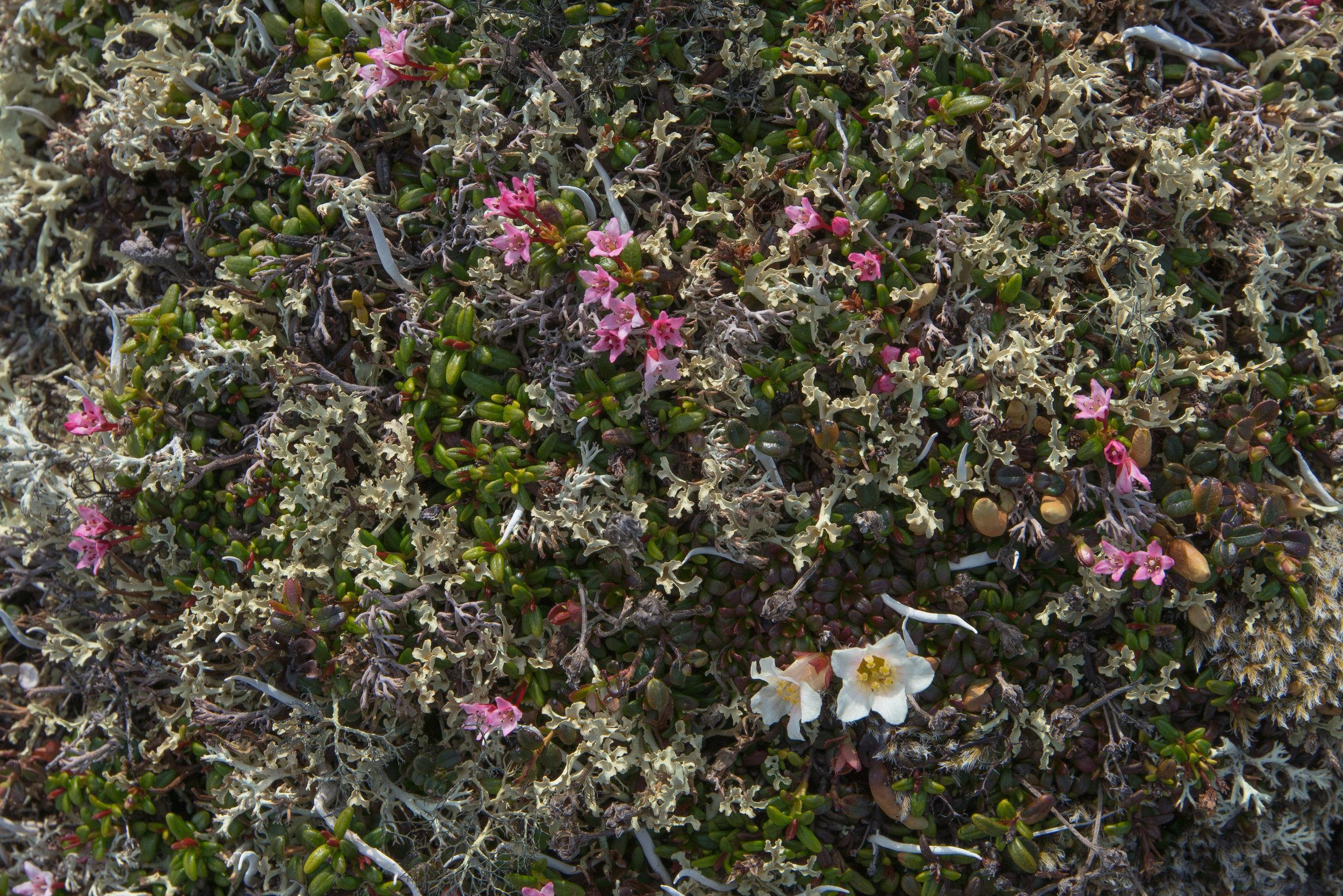 Clock_B_Art of Nature_ High tundra mosaic.jpg