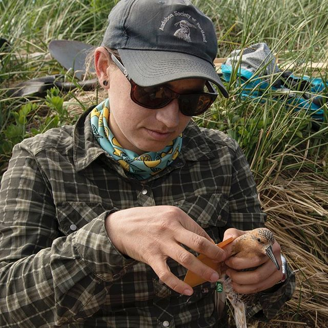 @calliegesmundo taking samples from a Red Knot and @laura.mcduffie measuring a Solitary Sandpiper.  Happy International Day of Women and Girls in Science!#internationaldayofwomenandgirlsinscience #conservationscience #conservationphotography