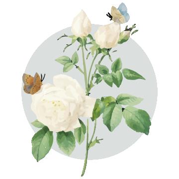 FLOWER CIRCLE2.png