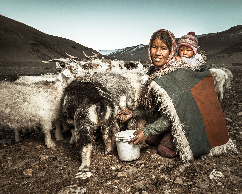 Milking the goats, Ladakh