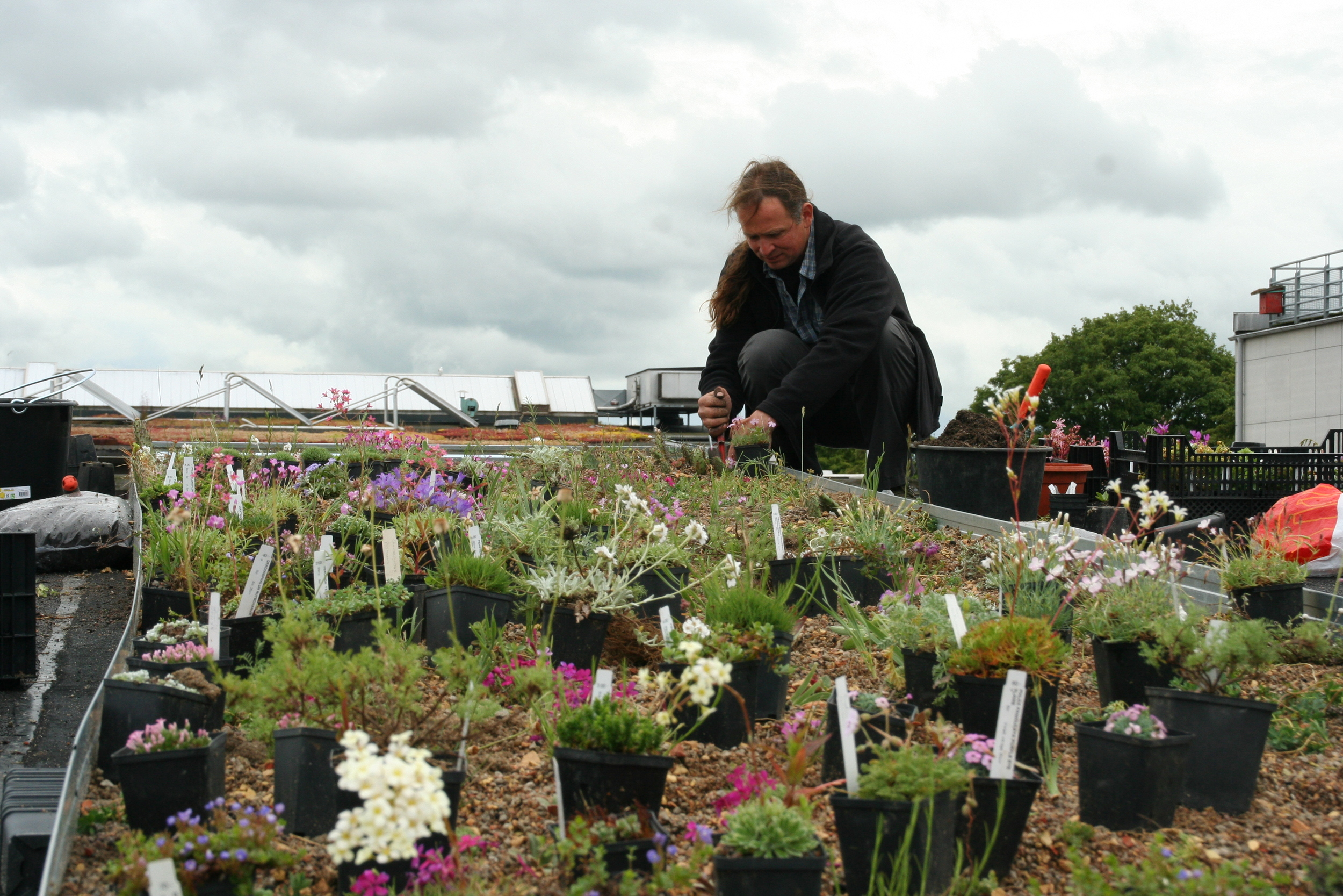 Peter Korn:Green Roof Installation. Augustenborg Botanical Roof Garden. June 2015