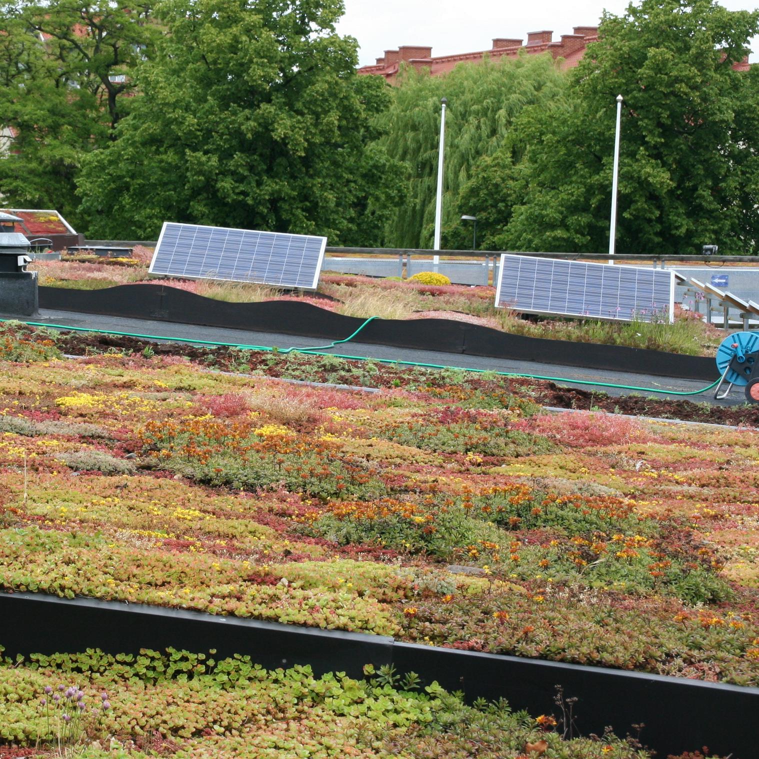BioSolar. Augustenborg Botanical Roof Garden, Malmö, Sweden