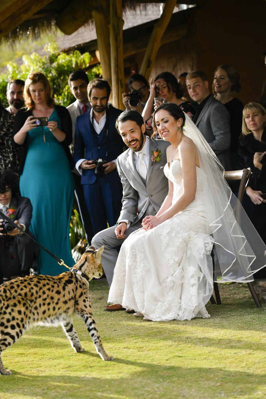 Safari-Park-Wedding-Stephanie-and-Sam-Brant-Bender-Photography-045.jpg