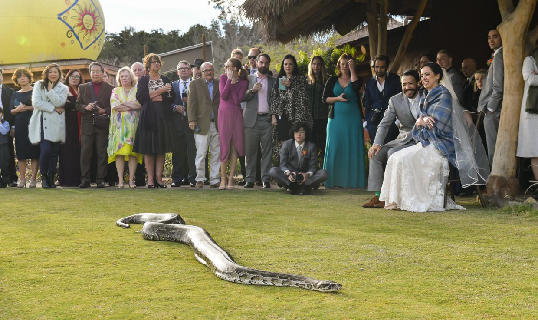 Safari-Park-Wedding-Stephanie-and-Sam-Brant-Bender-Photography-047.jpg